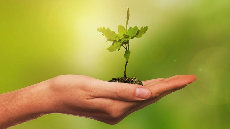 Ações Voluntárias - Mês do Meio Ambiente